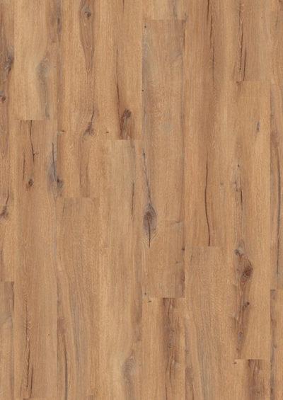 Daintree brown